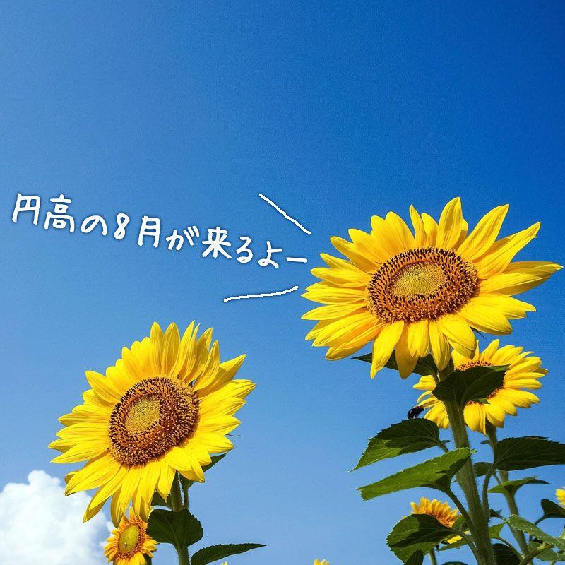 8月に円高でドル円が下がりやすい3つの理由